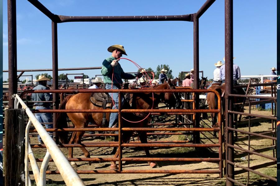 Roadside Rodeo