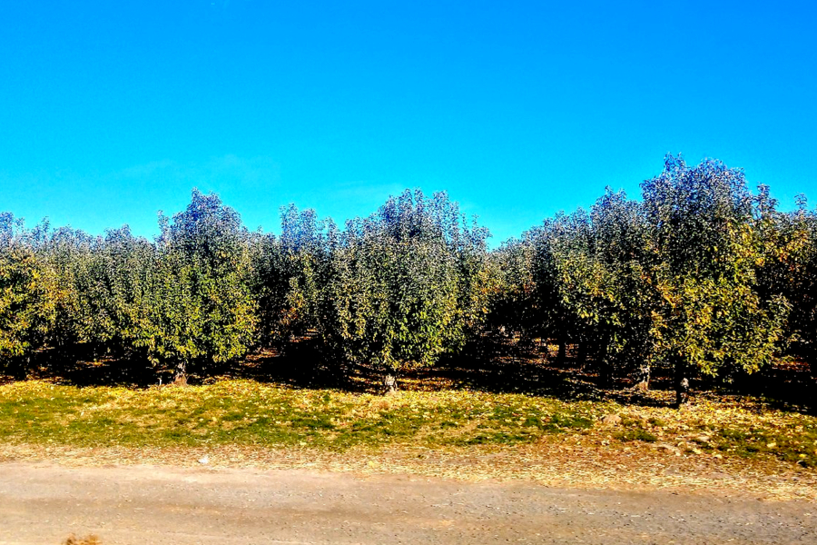 Washington apple country