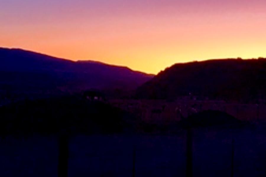 sunset with alpacas