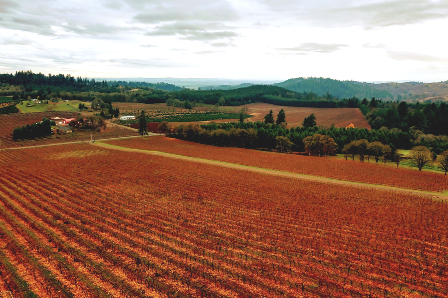 Oregon's wine country