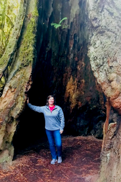 mary in redwood tree