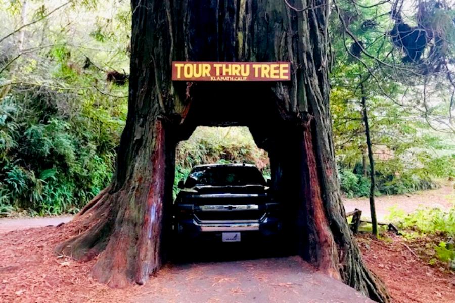 driving through redwood tree