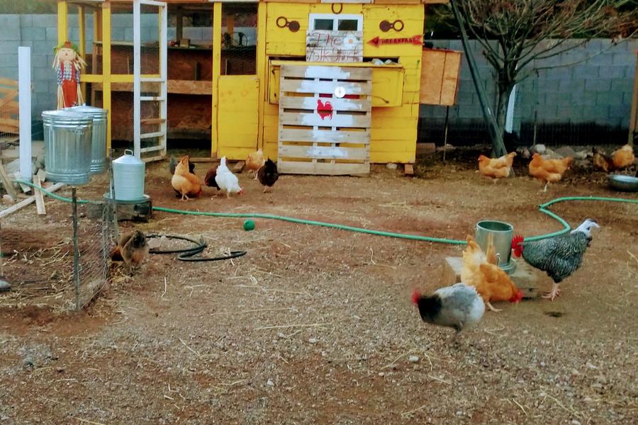 las vegas mini farm