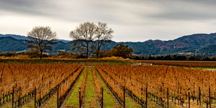 A Rainy Day In Wine Country – A Visit To Sonoma Valley, Day 84