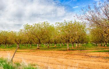 nuts in california
